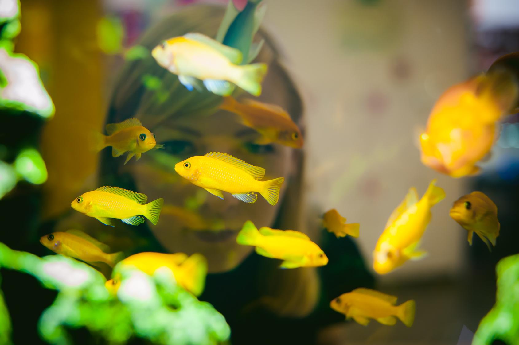 pyszczaki w akwarium