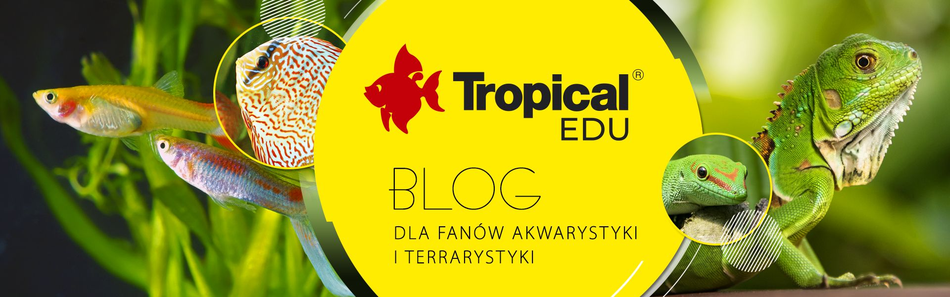 Tropical Edu