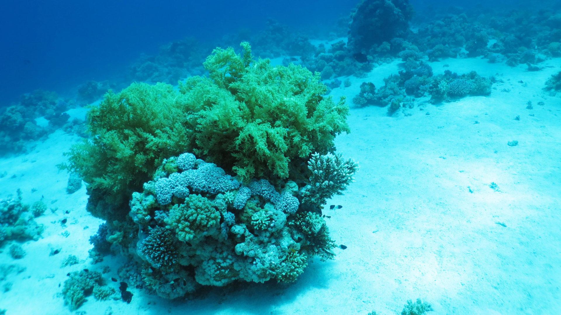 skała w akwarium morskim