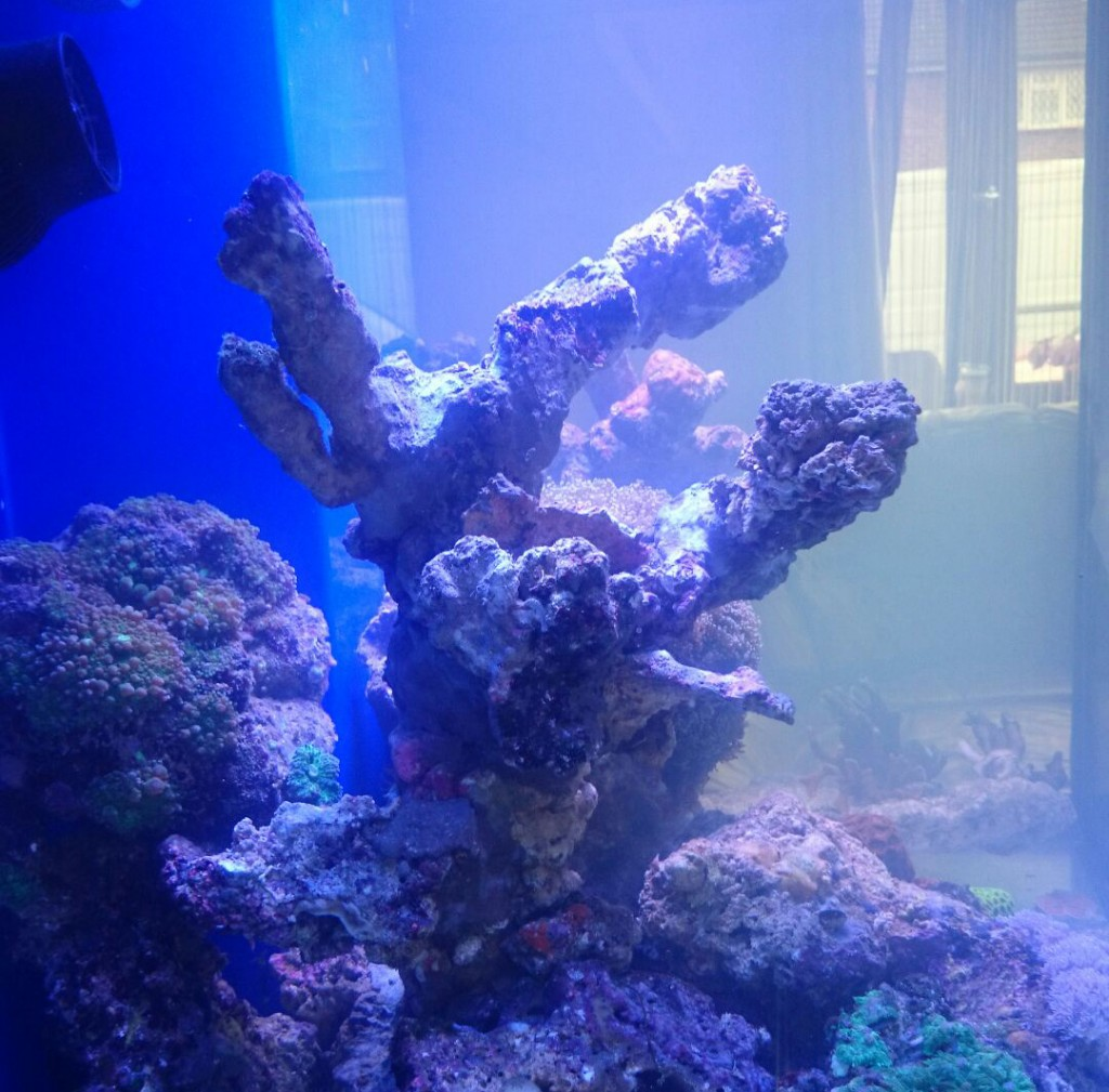 sztuczna skała w akwarium morskim